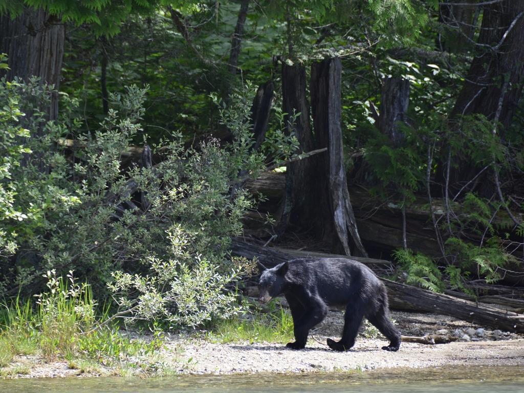 14 Juli, Clearwater – Jasper (Sunwapta Falls)