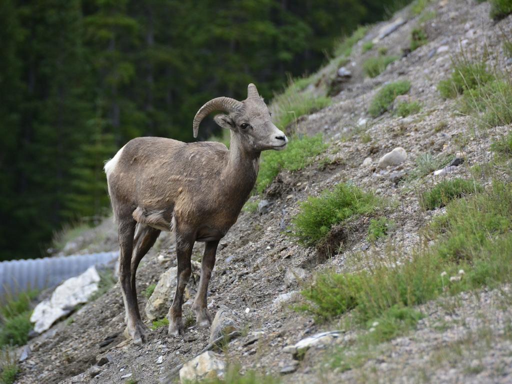 Icefiels Parkway van Jasper naar Banff, 17 juli